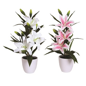 Decorative Lily Pot 62cm - 2 Assorted