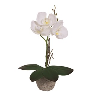 White Orchid in Pot 30cm