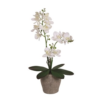 White Orchid in Pot 42cm