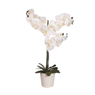 Orchid Pot White 78cm