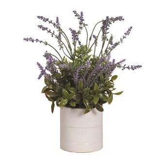 Lavender in White Pot 38cm