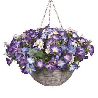 Petunia Hanging Basket Blue & White (30*45cm)