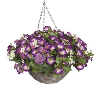 Petunia Hanging Basket Purple (30*45cm)