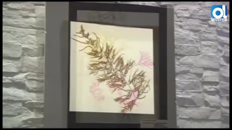 Una gaditana convierte las algas marinas en obras de arte