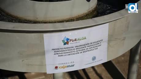 Puralga: residuos animales convertidos en biodiésel con ayuda de microalgas