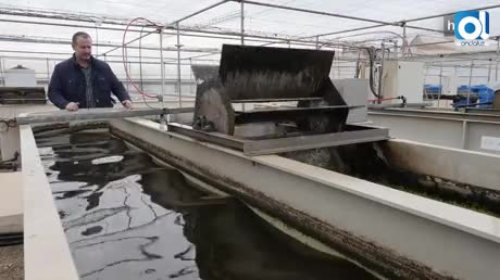 Fertilizantes y nutrientes para animales a partir de residuos de cerveza con ayuda de microalgas