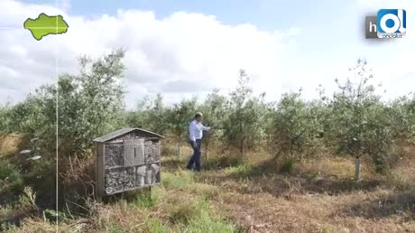 Hoteles para insectos para combatir plagas y recuperar biodiversidad
