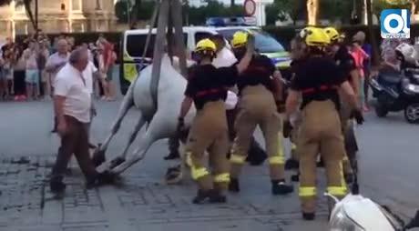 Partido Animalista pide revocar las licencias de coches de caballos