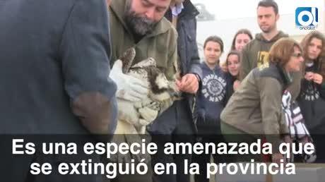 Un águila pescadora llamada Juana para el Día de los Humedales
