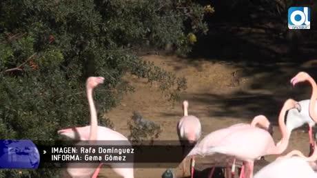 El Zoo de Jerez celebra 64 años de vida e historia