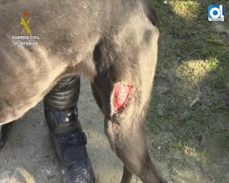 La acción ciudadana salva la vida a tres equinos y 42 perros