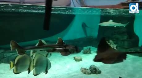 Global Omnium compra a la empresa propietaria del acuario de Sevilla