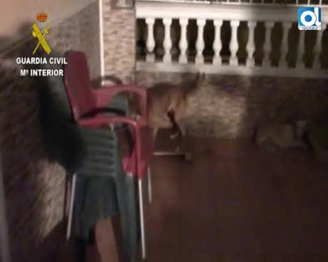 22 detenidos de una organización criminal dedicada al robo de perros
