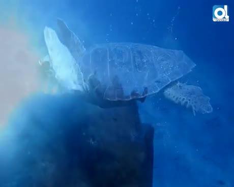 Animales de las profundidades vulnerables al cambio climático