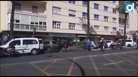 Una palmera cae sobre dos vehículos a consecuencia del fuerte viento