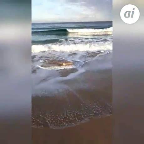 Hallan 646 kilos de hachís en fardos esparcidos en playas de Tarifa