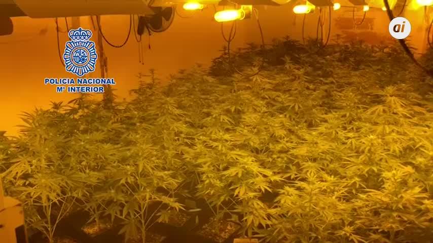 Desmantelado un invernadero con 373 plantas de marihuana en Málaga