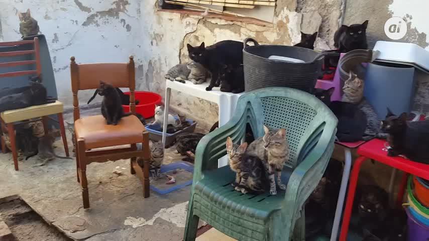 Convivían con 101 gatos en una casa en el centro de Málaga