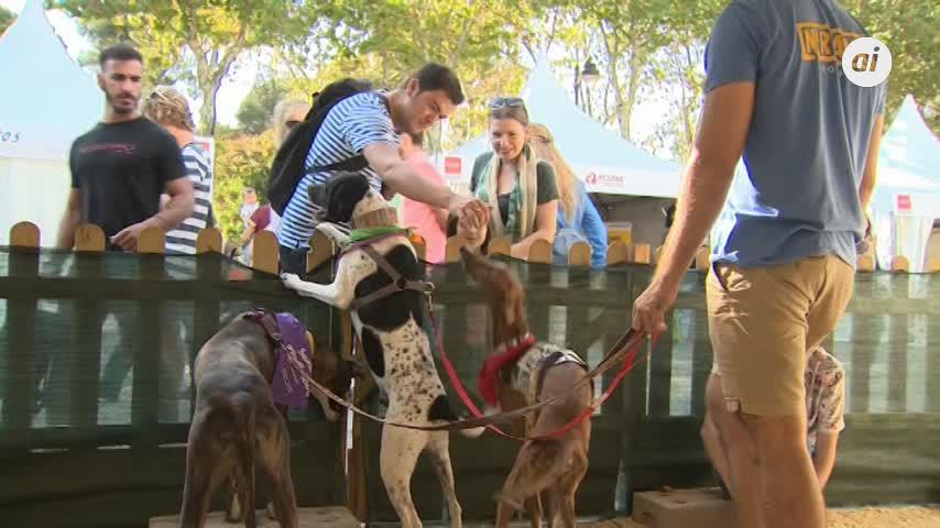 El Retiro celebra el 'Salón para la Adopción de Animales de Compañía'