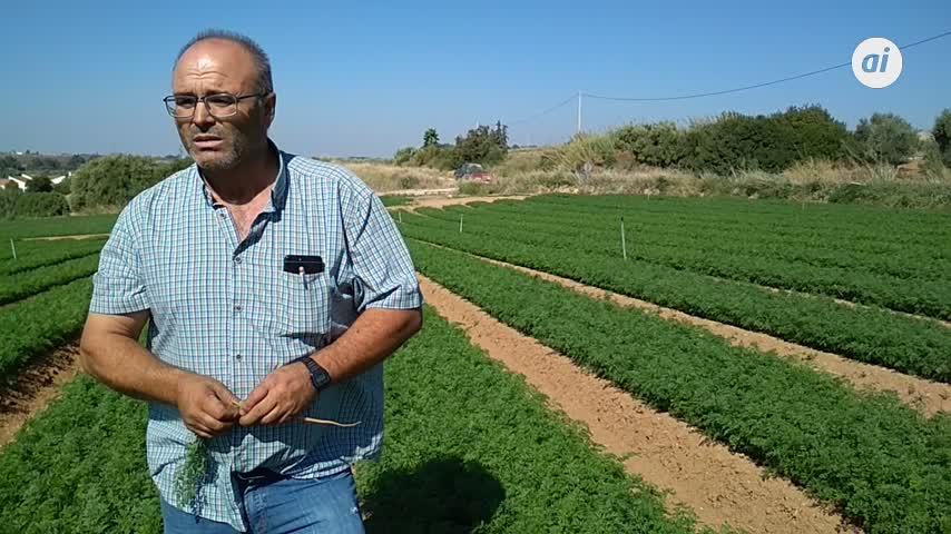 La zanahoria, uno de los productos más exportados de la provincia