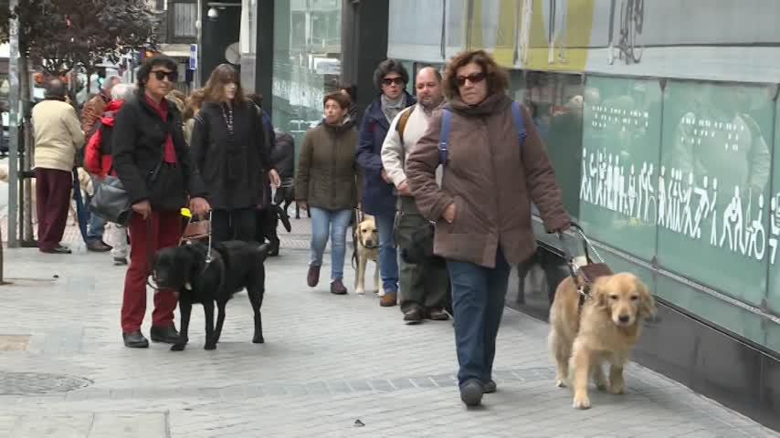 Invidentes y perros guía realizan un paseo reivindicativo