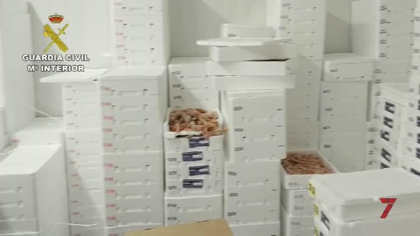 Intervenidas más de 150 toneladas de cigala ilegal en A Coruña