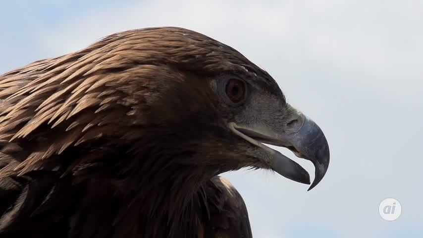 'El águila y el mar', el legado de la Marina española al mundo