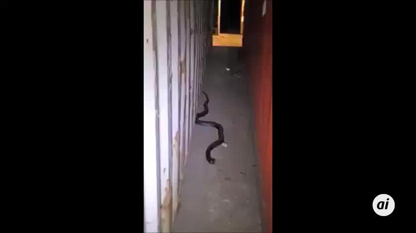 El Seprona intercepta una serpiente suelta en el Puerto de Algeciras