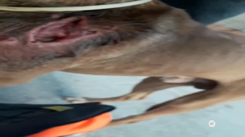 Escalibur: otro ejemplo de maltrato a los perros en Málaga