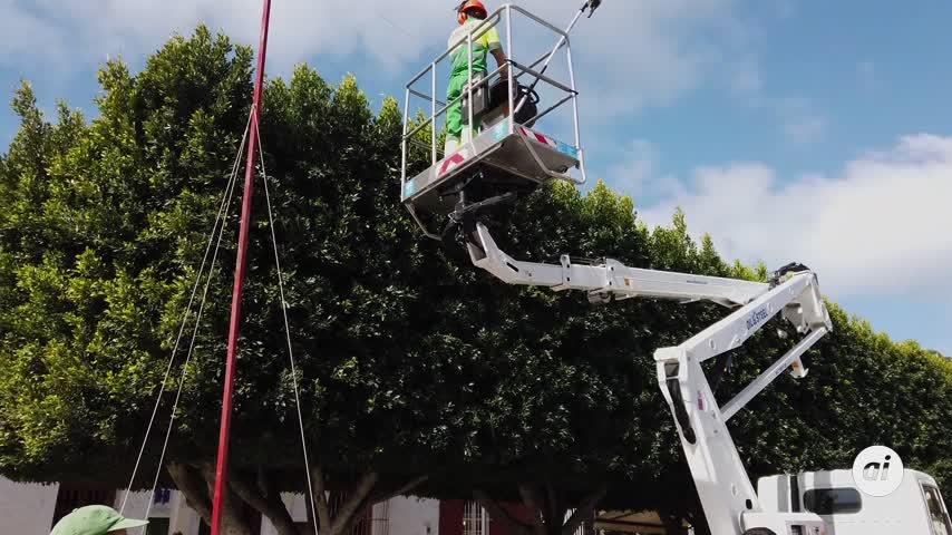 Podas de arboles y arbustos que perjudican a las plantas y a las aves