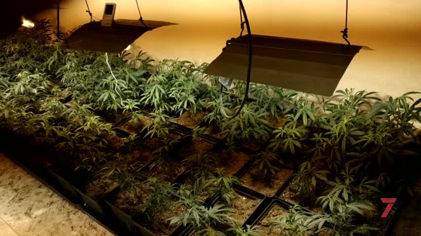 Detenido por montar una plantación de marihuana en casa de su abuela