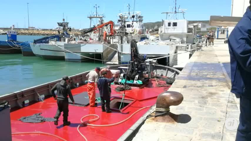 Espectacular video de la llegada de atunes rojos al puerto de Barbate