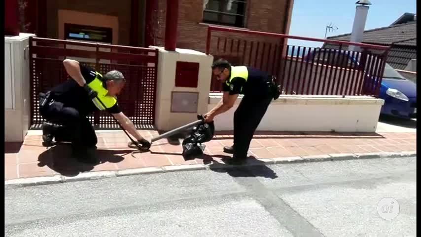 Invasión de serpientes en Málaga: capturan tres en solo cinco días