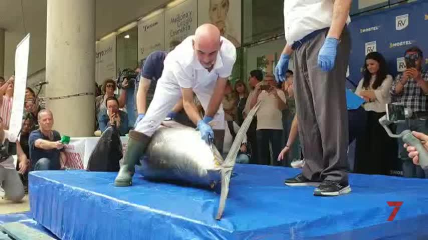 El ronqueo del atún en el Mercado del Carmen, todo un éxito