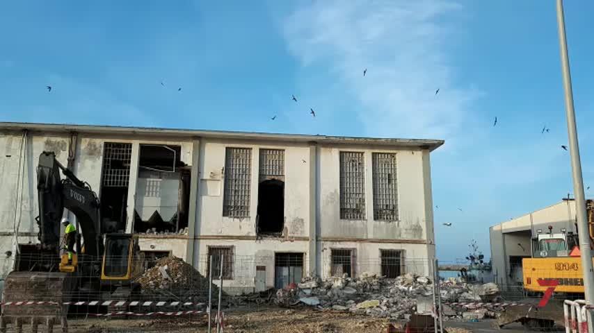 Unos vencejos paralizan la demolición de la Fábrica de Hielo