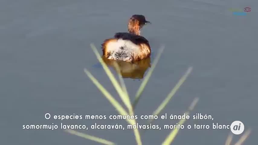 Málaga, con 370 especies de aves, promociona su ornitología