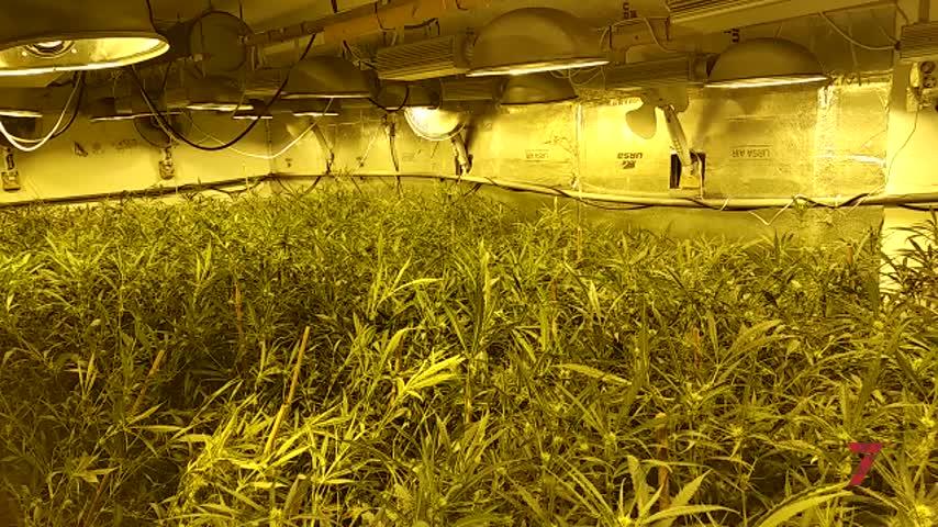 Guardia Civil desmantela otra plantación indoor de marihuana en Jerez