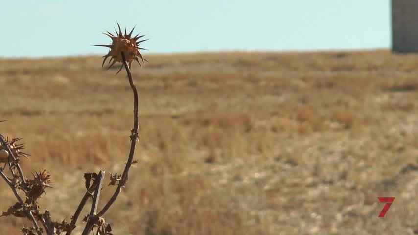 Asaja pide la declaración formal de sequía para compensar pérdidas
