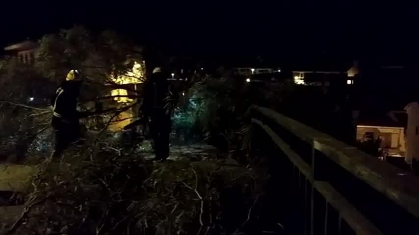 Susto en Málaga por la caída de noche de una gran rama de un eucalipto