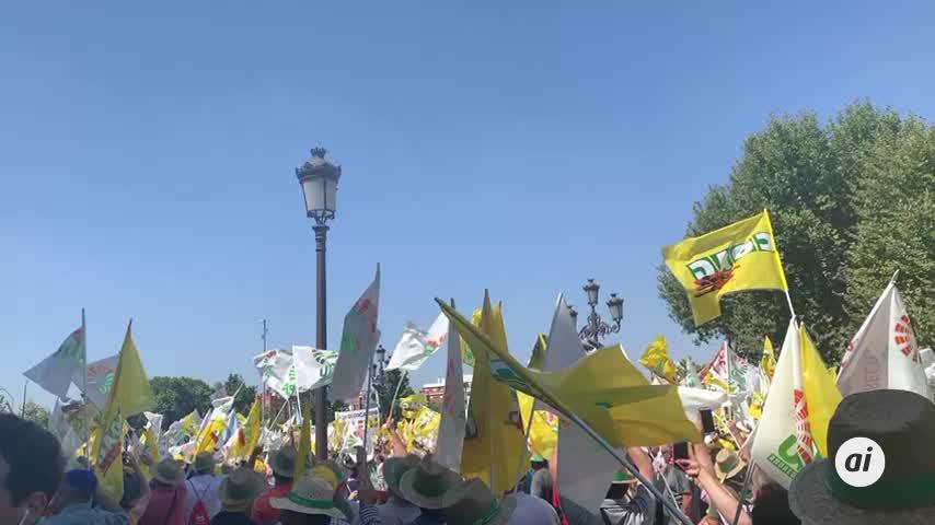 """Miles de olivareros claman en Sevilla contra el """"robo"""" de los precios"""