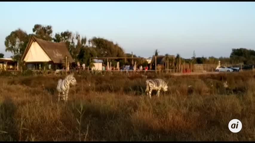 Pintan como cebras a dos burros en un chiringuito de El Palmar
