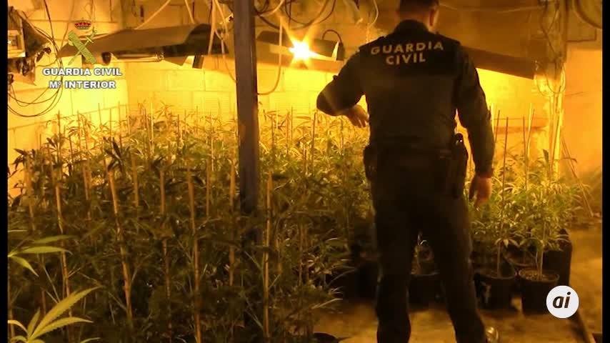 Córdoba: 11 detenidos y 720 kilos de marihuana en la mayor plantación