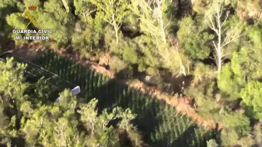 Desmantela una plantación de marihuana en un Parque Natural