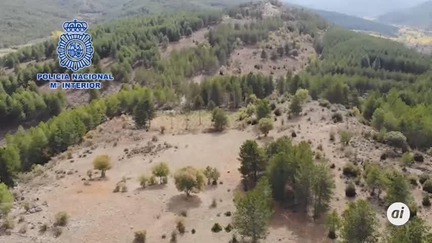 Cae un grupo que cultivó 2 toneladas de marihuana en Serranía Cuenca
