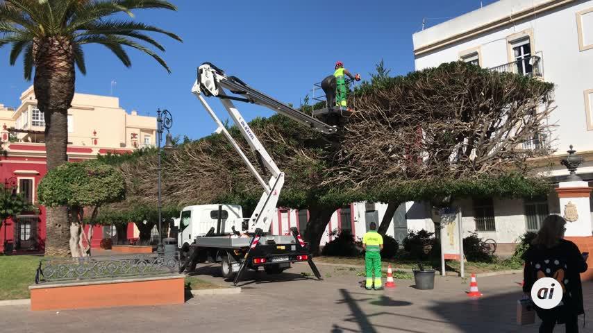 Sigue la campaña polémica de la poda de árboles de las zonas verdes