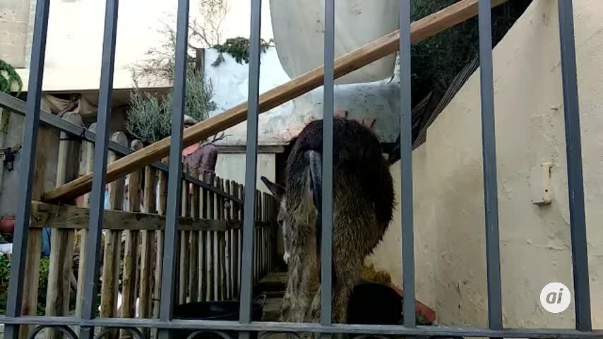 Ecologistas exigen la retirada de animales vivos de belén en El Puerto