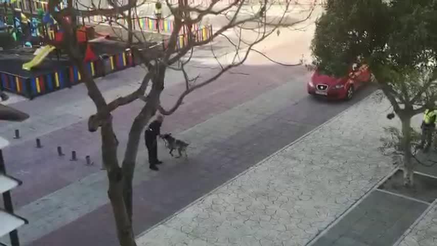 Continúan las exhibiciones de la Unidad Canina de la Policía Local