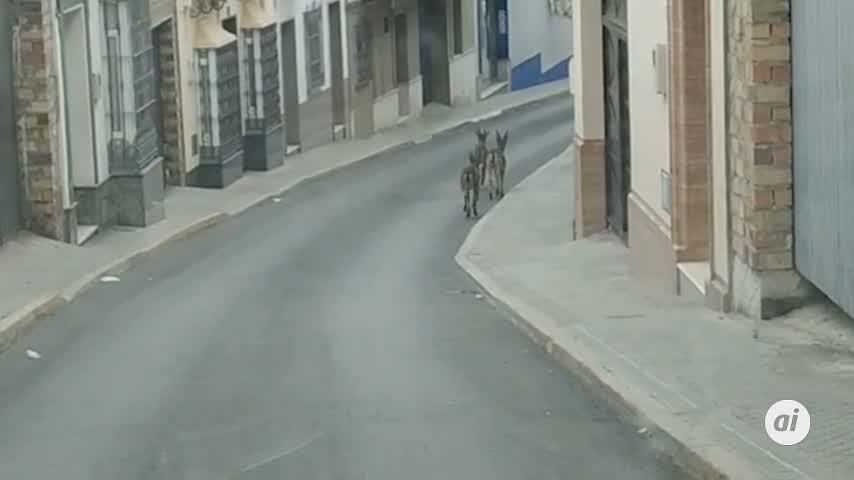 """Varias cabras """"campan a sus anchas"""" por las calles de Morón (Sevilla)"""