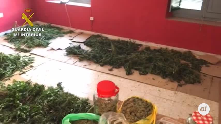 36 detenidos por cultivo y tráfico de marihuana en Córdoba y Cádiz