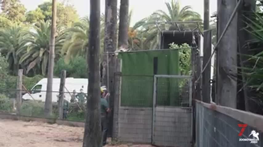 El Zoo de Jerez se despide de Jiráfali
